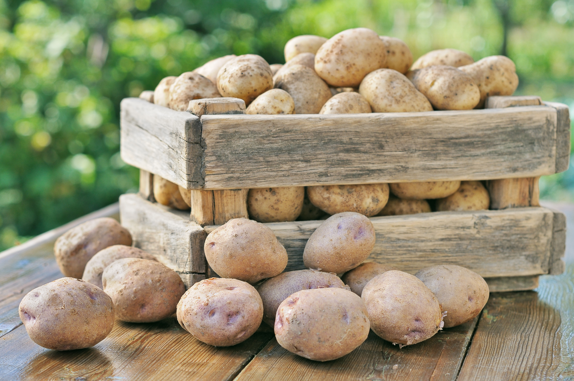 Potato Box