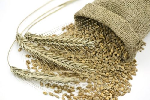 Rye Grain for Mash